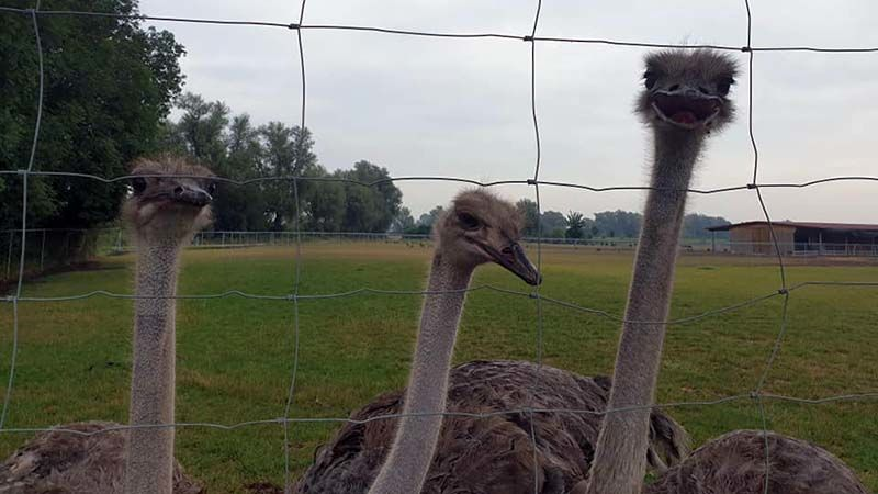 You looking at me, shorty? Ostrich farm en route to Augsburg